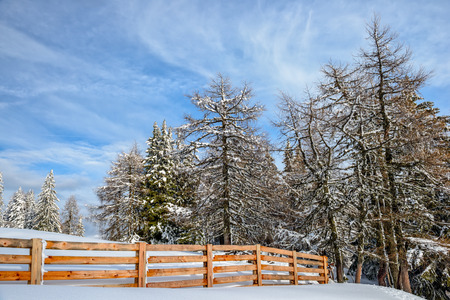 Winter forest and wood fence under cloudy blue sky Stock Photo
