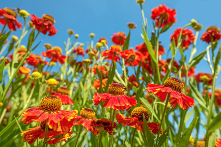 Close up of red flowers over blue sky