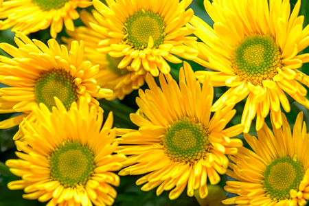 Close-up view of yellow blooming flowers Stock Photo