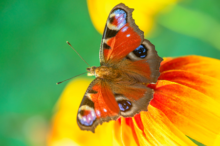 Butterfly on a flower. Closeup view