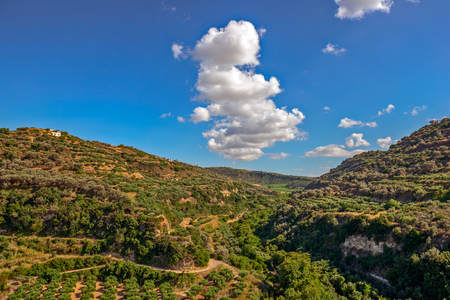 Olive groves on hills in Crete island, Greece