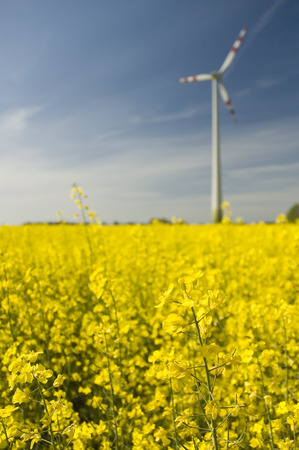 Wind generators with rapeseed fields.  photo