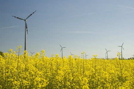 Wind turbines and rapeseed field Stock Photo - 1471153