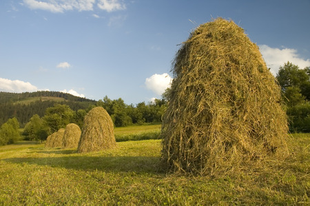 Mountan meadows with cured grass and hills of hay in summer. Stock Photo - 1479242