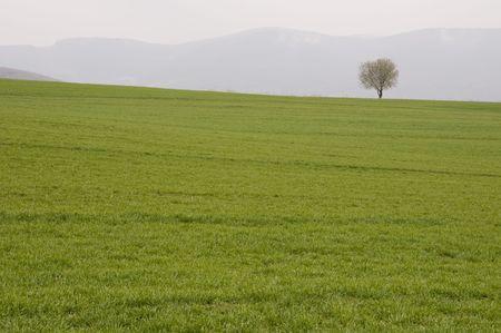 horizont: Tree on the horizont of grassland