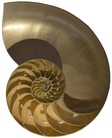conch shell: Close up of nautilus shell Stock Photo