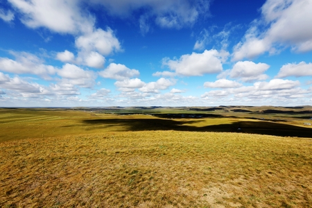 convective: Grassland scenery
