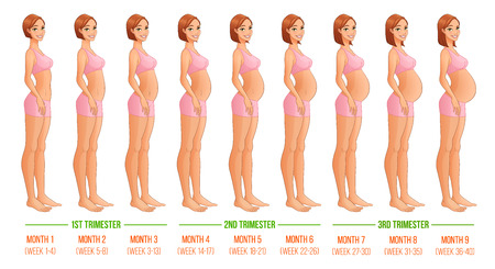 Nine months of pregnancy progression. Vector illustration isolated on white backgeound. Çizim