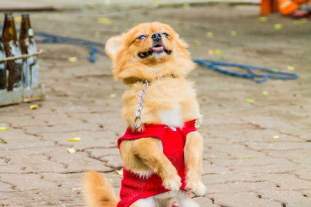canny: dog stand two leg. Stock Photo