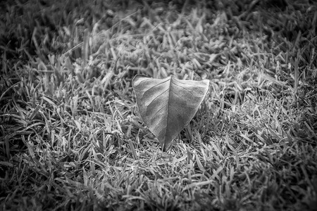 unobtrusive: Leaves have fallen on the floor, looked to me to be very unobtrusive. Stock Photo