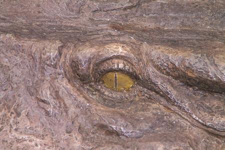 alligator eyes: Eyes of a statue of fake crocodile. Stock Photo