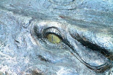 alligator eyes: Eyes are fake Stock Photo
