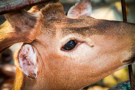 inmunidad: Desde el bosque hasta el zool�gico sin inmunidad.