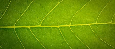 the green leaf for the patten