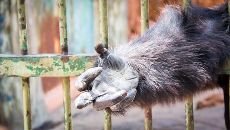 fuck: the monkey give fuck