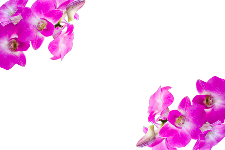 flower of live: The orchid is the beatiful flower live in the nature