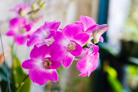 The orchid is the beatiful flower live in the nature Reklamní fotografie - 50872768
