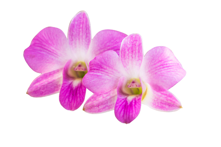 The orchid is the beatiful flower live in the nature