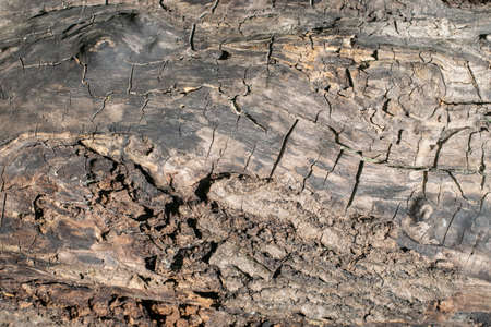 The Surface Of Old Weathered Oak Wood 写真素材