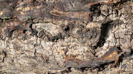 Close-up macro texture of a oak tree trunk 写真素材