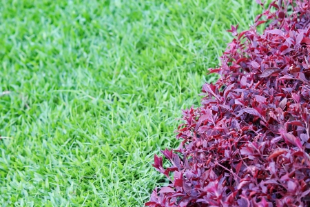 two tone: Two Tone Grasses