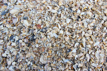 Closed up old shells on the beach  in Nakhon si thammarat, Thailand Stock Photo