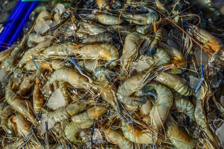 freshwater: Giant freshwater prawn in the Thai local market Stock Photo