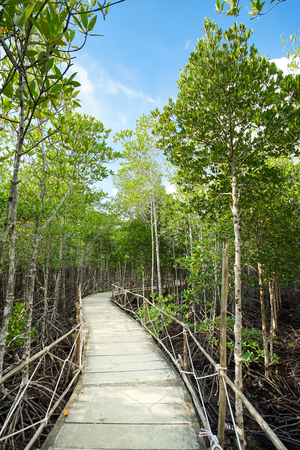 Environment conservation Mangrove forest in Trad province, Thailand.