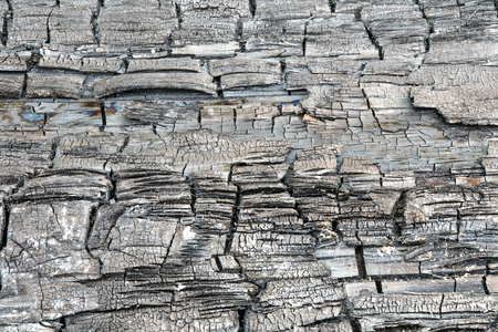 The texture or background of charred or burned wood log. The macro shot is made by means of stacking technology