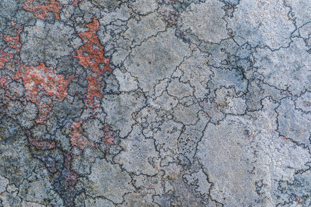 The texture or background of the old stone surface covered with the lichen and moss. The picture is much alike the maps