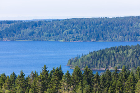 The green forest of fir, spruce an pine trees near the shore of the lake in the sunny summer day