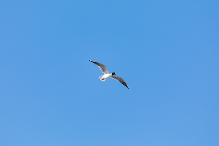 The gull in the blue sky