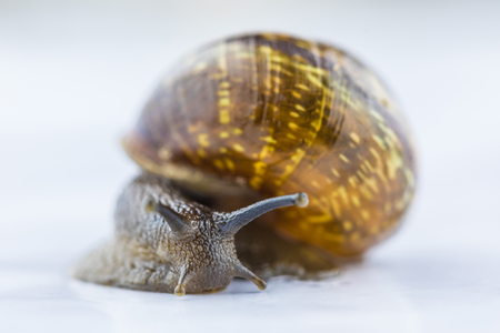 Isolated snail on white Imagens