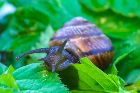 Snail in foliage Imagens