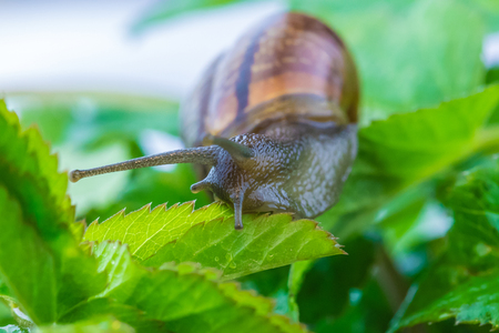 Snail in foliage