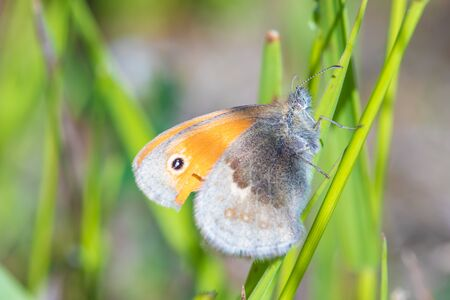 Butterfly in the grass Stok Fotoğraf