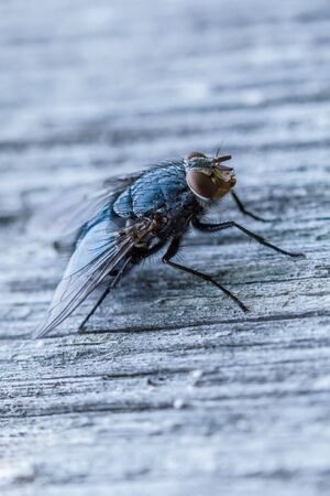 Fly on the wood surface