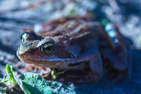 Macro shot of frog or toad