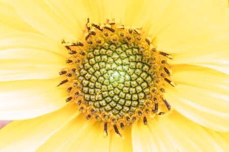 The macro shot of the yellow flower Stock Photo