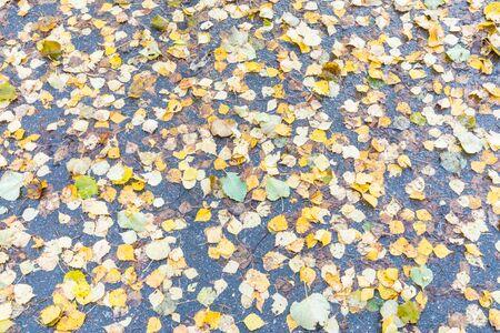 Falling foliage background