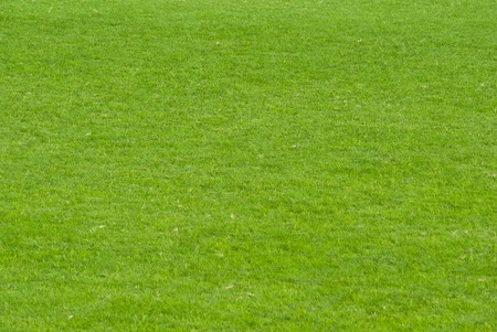 lawn cut short just for soccer, grass green and English on a sunny day Stock Photo - 7856540