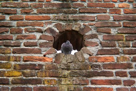a pigeon in a hole in the wall of an ancient medieval castle during a party  photo