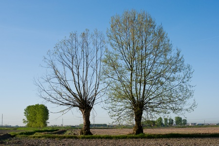 mirrored on two trees along the street in a blue sky in spring  Stock Photo - 9280653