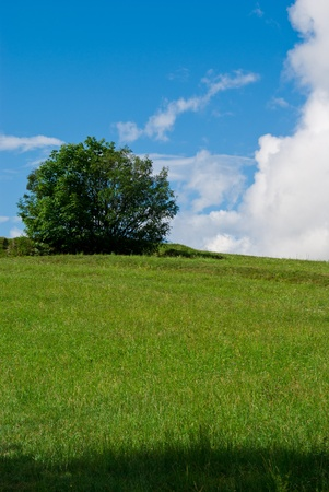 a meadow with beautiful clear skies and a few small clouds are the background to a solitary tree photo