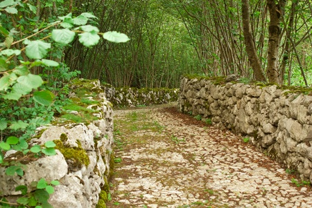 clay stone road in jungle: country road built with stones and plunged into the forest beside a mountain lake