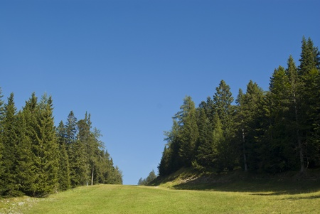 a meadow with beautiful clear skies and a few small clouds are the background to a solitary tree Stock Photo - 13101572