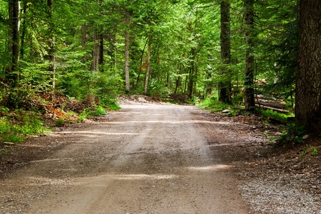 clay stone road in jungle: beautiful country road that runs along a forest in the mountains of Trentino