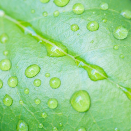 nervation: green leaf with drops