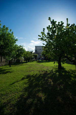 shady: garden with the sun and shady trees