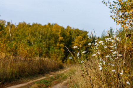 country living: wildflowers, leaf fall, country living, melancholy, peace, calm, quiet, silence, beauty, nature, road, sky Stock Photo
